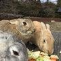 突撃訪問 大久野島