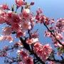 春到来♪♪