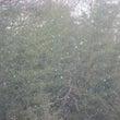 (17日記-2) 雪…