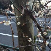 春もすぐそこ?