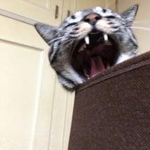 うちの猫って実はリア…