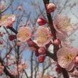 3月8日(日)福岡教…