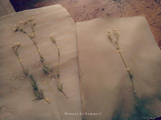 植物標本 手作り アンティーク