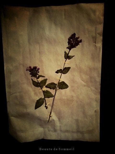 ハンドメイド 植物標本 アンティーク