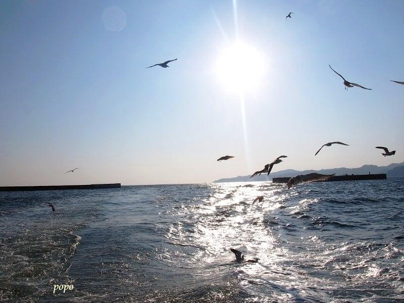 ウミネコと海03