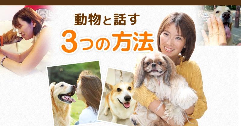 動物と話す3つの方法