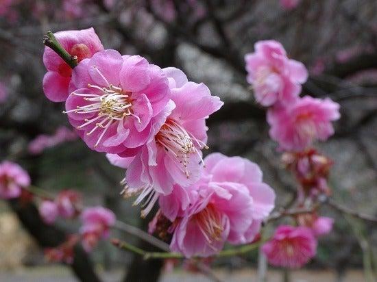 koishikawa14