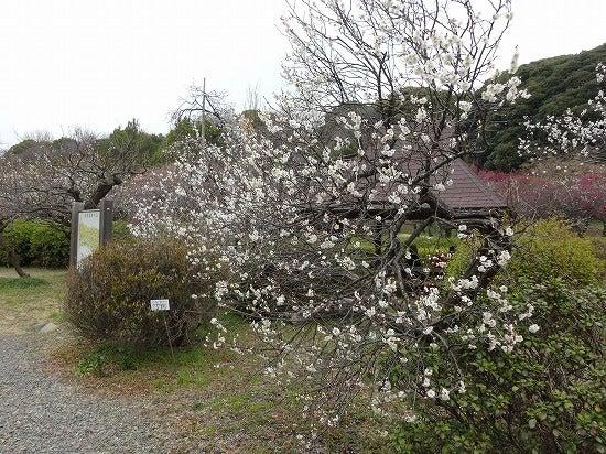 koishikawa15