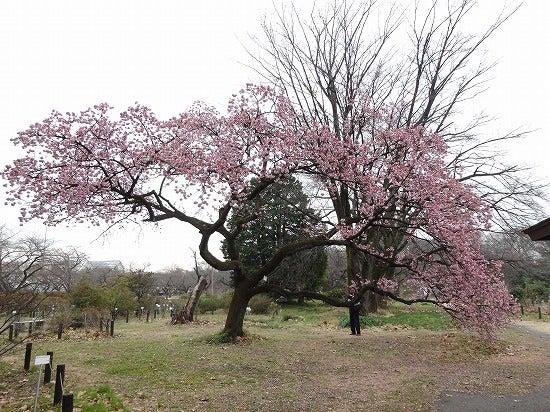 koishikawa19