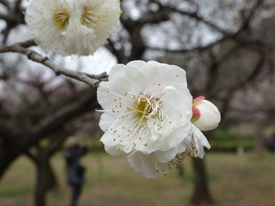 koishikawa13