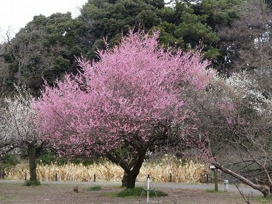 koishikawa12