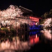 平安神宮夜桜2