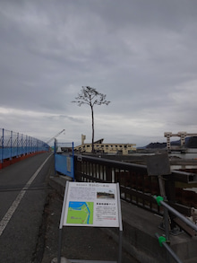 陸前高田6