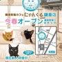 【お知らせ】譲渡型猫…