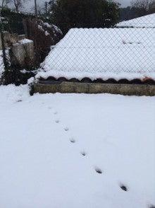 プロヴァンスの雪