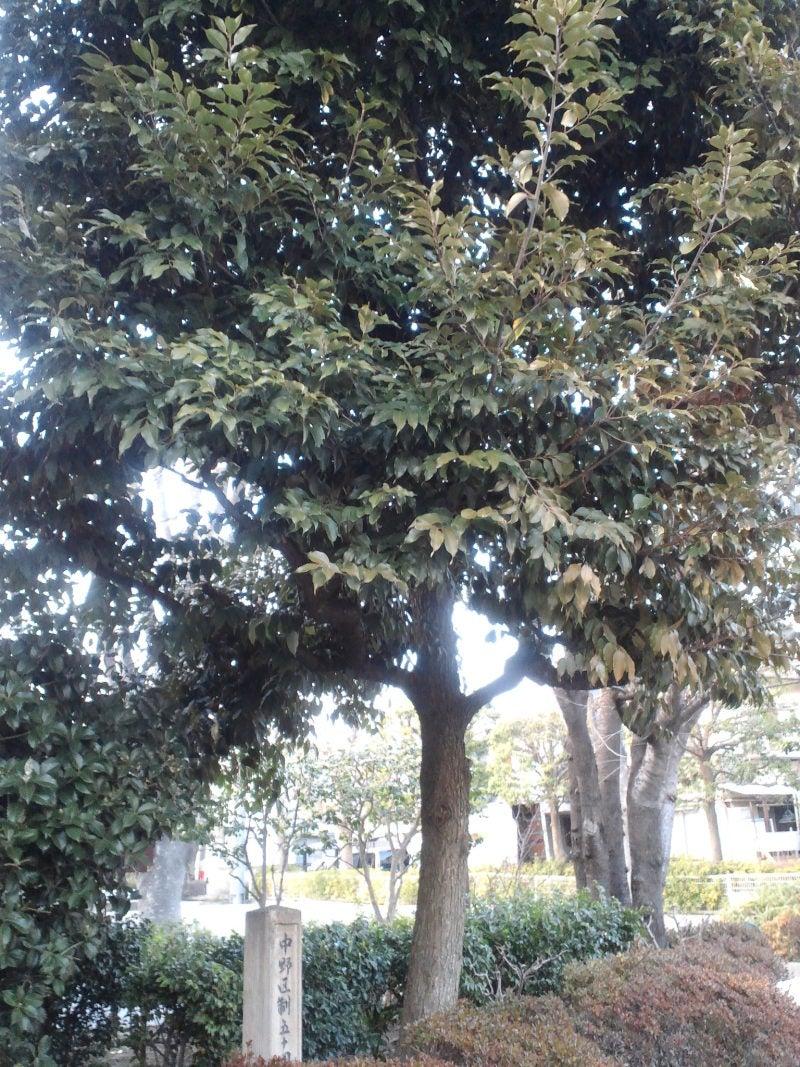 気づかなかった木