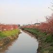 鷲宮(青毛掘川)の河…