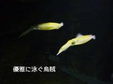 加茂水族館10
