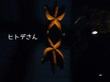 加茂水族館7