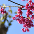 春の花、続々と・・・