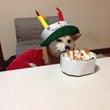 ユキちゃん誕生日