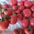 レイラチャン!トマト…