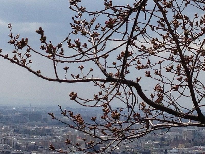 明月記桜 27年