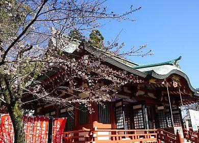 H27.3.25 静岡市桜情報-5