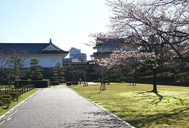 H27.3.25 静岡市桜情報-3