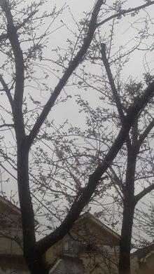 桜が咲く前