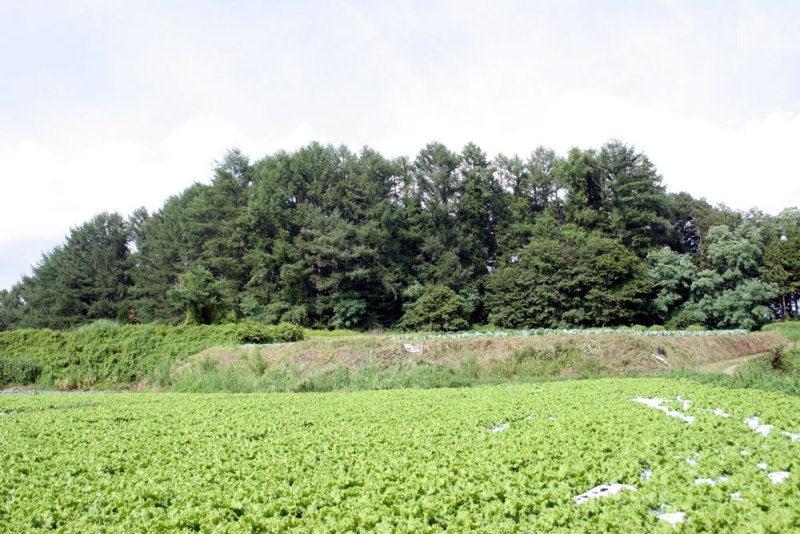 小田井城/④土塁