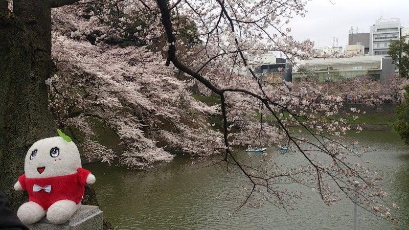 sakura nasshi