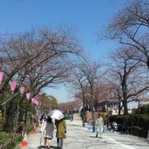 桜咲く、、、、(その…