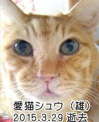 シュウ 猫 白河甚平