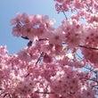 お花見☆上野公園②