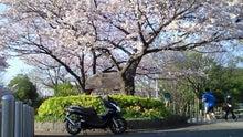 20150331水元公園桜並木とPCX