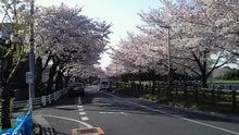20150331水元公園の桜並木