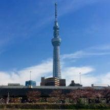桜2015年
