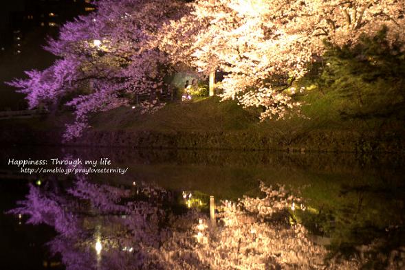 sakura_atnight2015_16