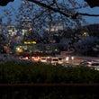 夜の千鳥ヶ淵...桜…