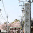 鷲宮の桜/お花見スポ…