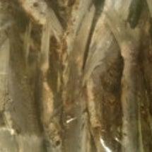 焼き飛び魚ラーメン …