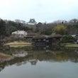 桜の名所彦根城
