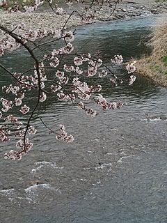 太田川と桜(森町)