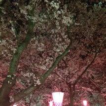 夜桜とヘアーとキラキ…