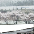 宇都宮★この時期に雪…