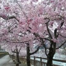 それぞれの春♪