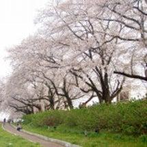 4月12日 福井さく…