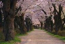 桜の展勝地