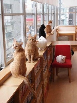 横浜でかわいい猫ちゃんと触れ合える♡おすすめ猫カフェをご紹介!